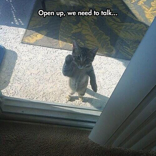 funny-cat-door-glass-knocking