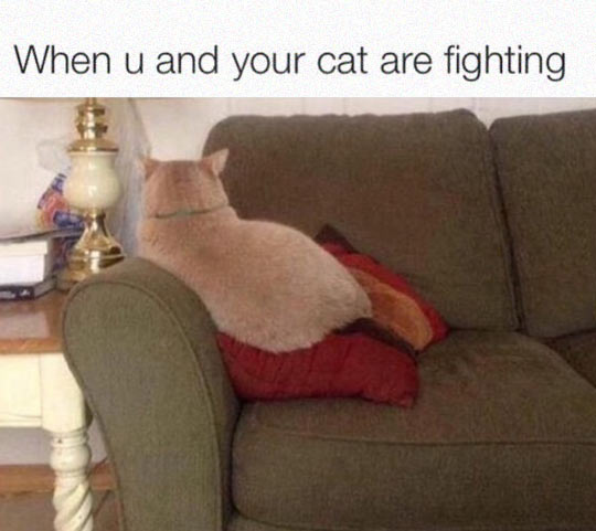 funny-cat-mad-sofa-not-looking