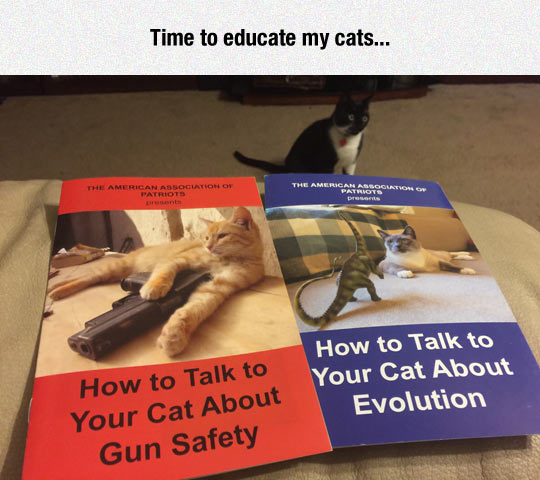 funny-cat-safety-guide-teach