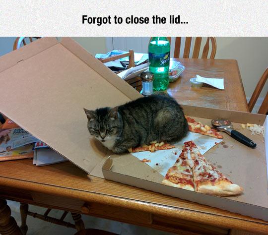 funny-cat-slice-pizza-box