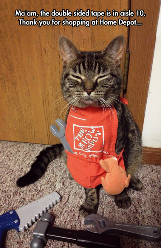 funny-cat-tools-Home-Depot-costume