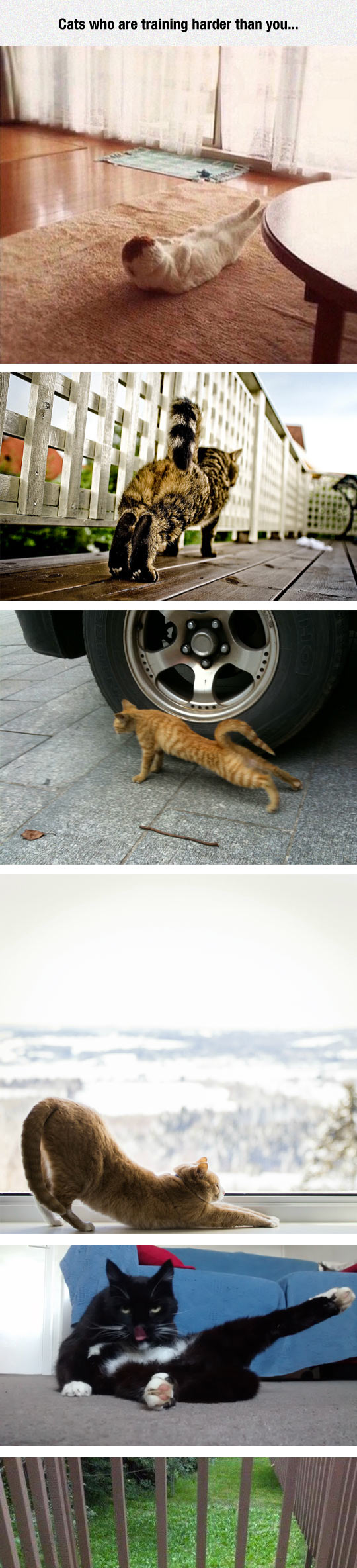 funny-cats-working-out-exercise