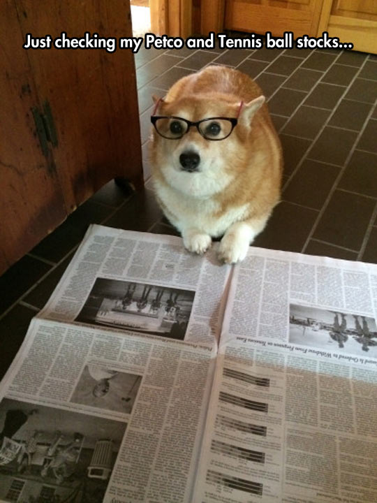 Financial Analyst Corgi