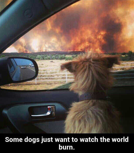 funny-dog-fire-watching-car