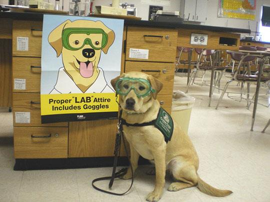 Proper Lab Attire