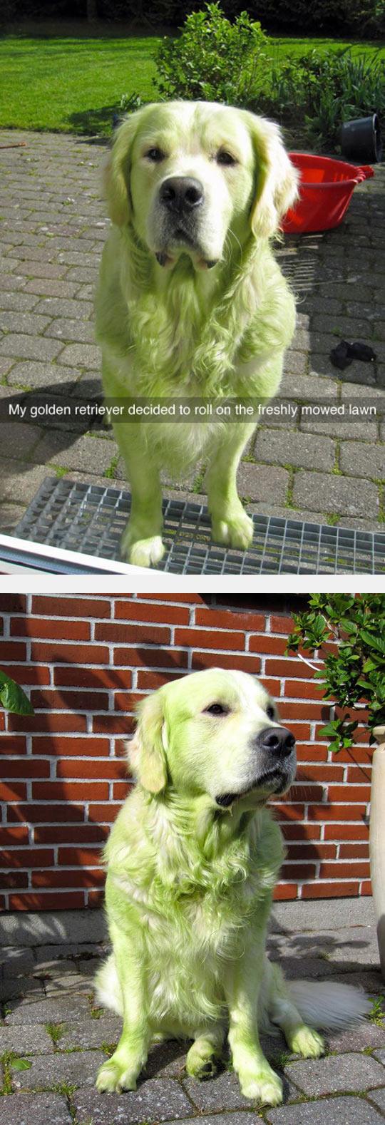 funny-dog-green-fur-mowed-lawn