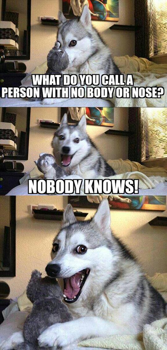 funny-dog-husky-pun-body-nose