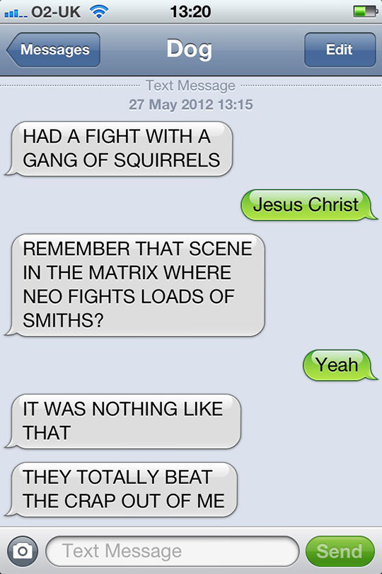 funny-dog-message-squirrels-fight