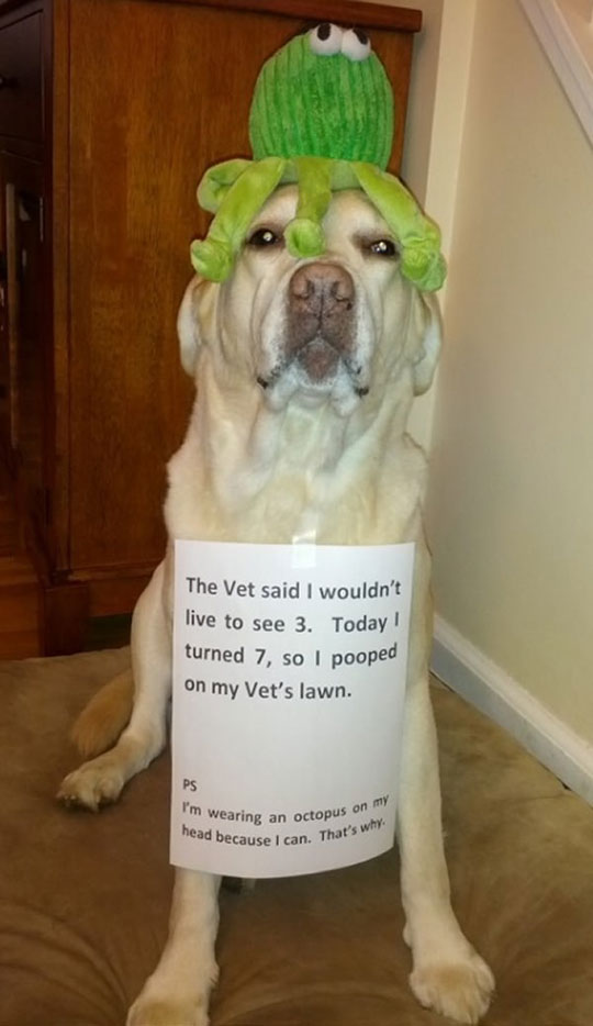funny-dog-note-octopus-head