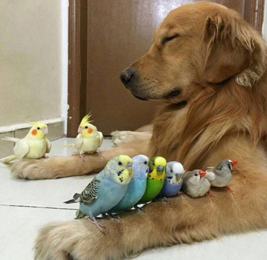 funny-dog-sleeping-birds-arms