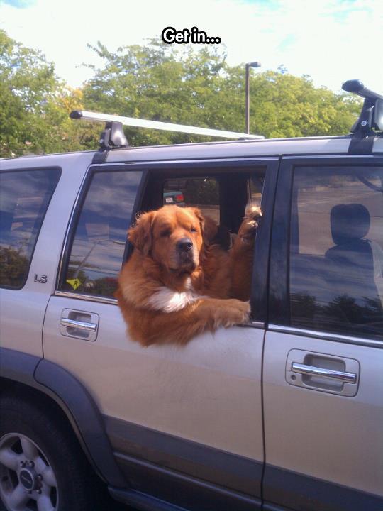 funny-dog-window-car-calling-you
