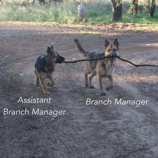 Two Dogs At Work