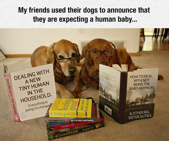 funny-dogs-reading-books-baby