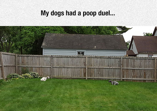 funny-dogs-yard-poop-opposite