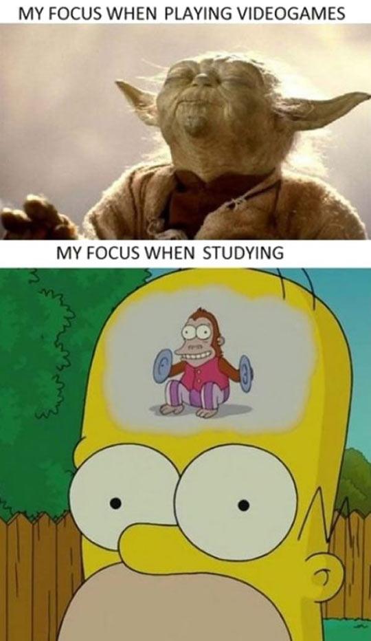 My Focus
