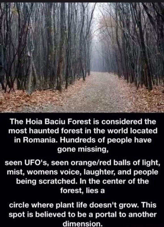 funny-forest-haunted-Romania-missing