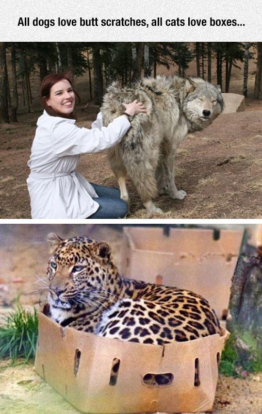 Universal Animal Truth