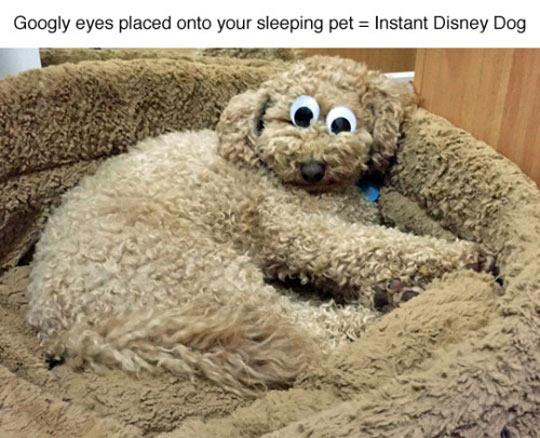 Instant Disney Dog