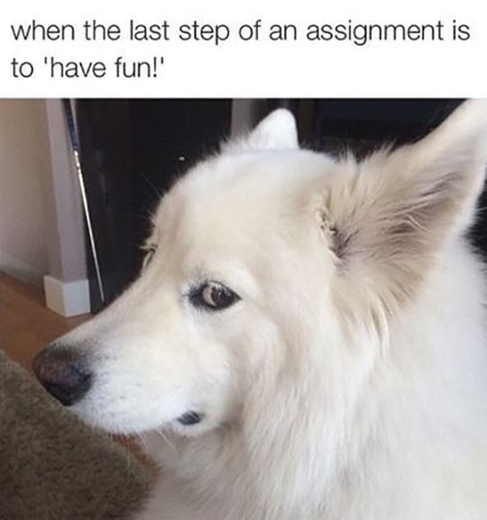 funny-last-assignment-dog-looking