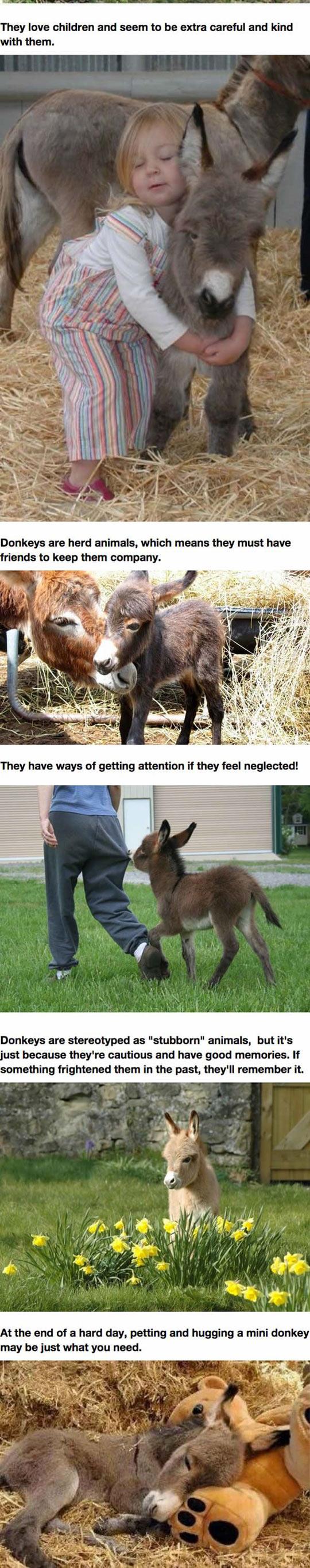 funny-mini-donkeys-dream-pet-kids-farm