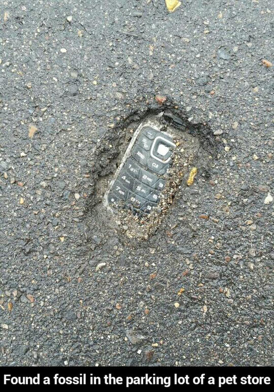 funny-parking-lot-phone-pavement