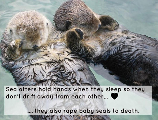 funny-sea-otters-holding-hands