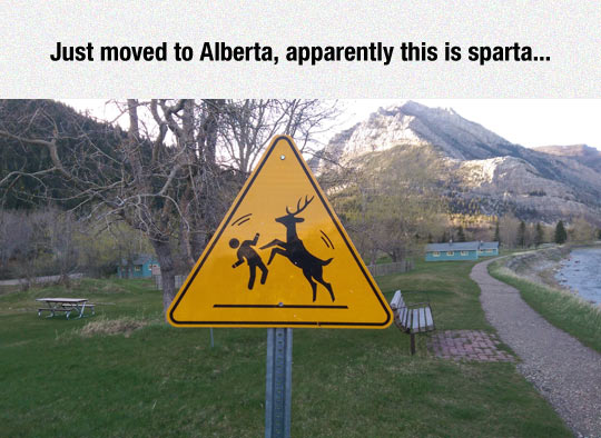 funny-sign-moose-attack-Alberta