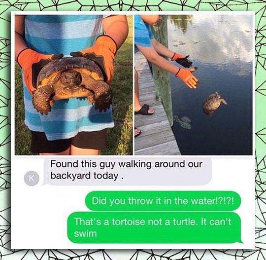 Found A Turtle