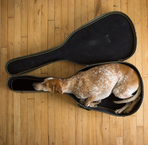 A new use for a guitar case…