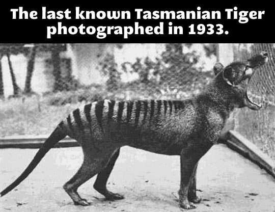 A weird animal from the past…