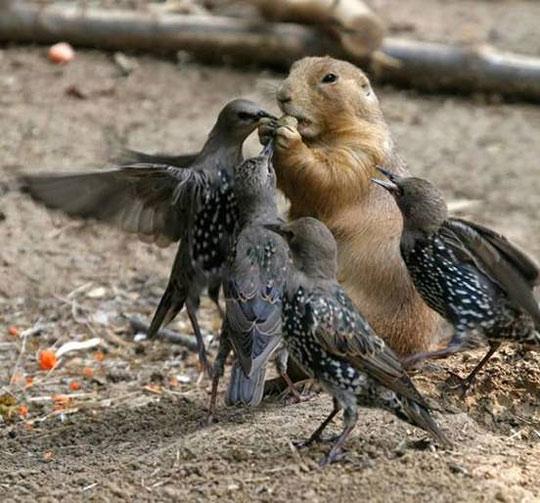 Go away bird, I'm eating my morning nut.