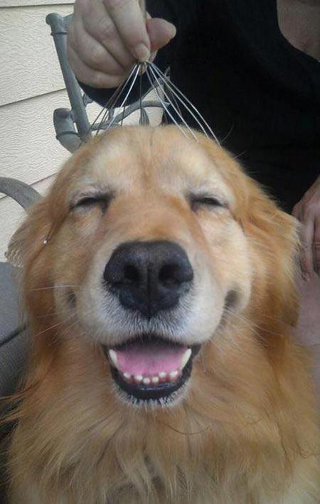 He's just too happy…