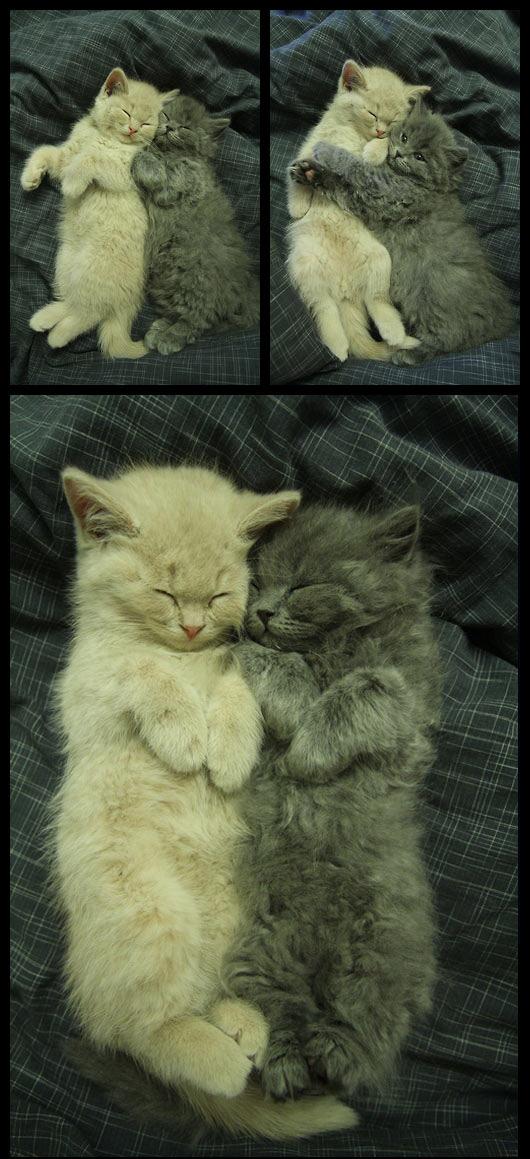 Kitty buddies…