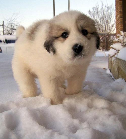 Little ball of snow