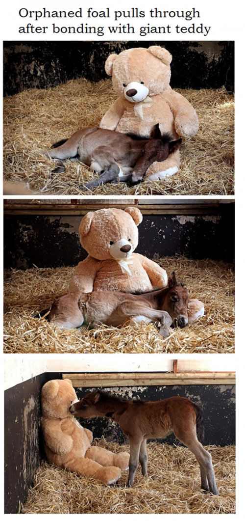 Orphaned pony's best friend is a teddy bear called Button…