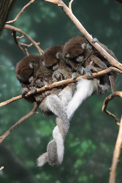 Tail hug…
