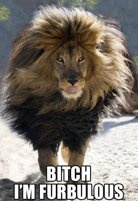 When lions use shampoo…