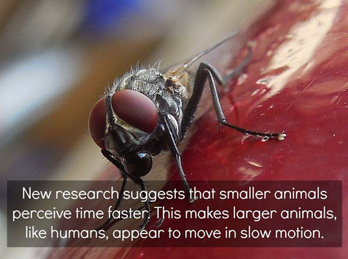 awesome_facts_15