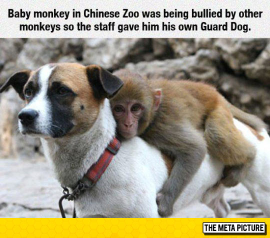cool-monkey-guard-dog