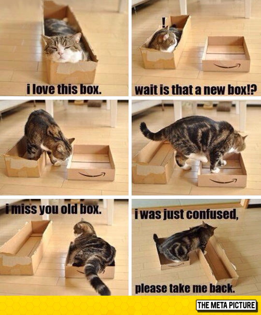 cute-cat-changing-box-large