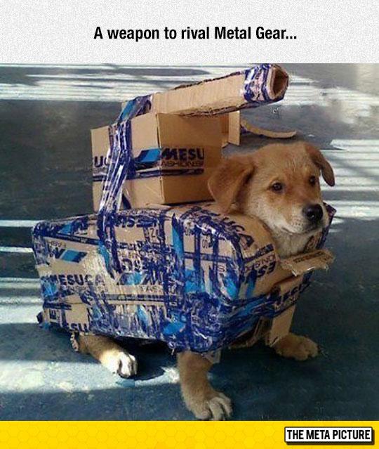 A Shagodog