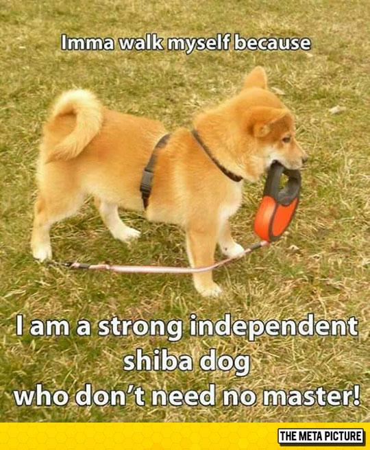 cute-dog-holding-leash-park