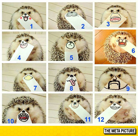 cute-porcupine-drawing-mouth