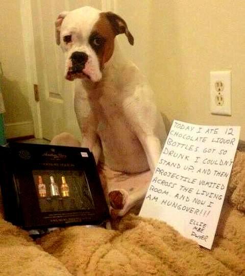 dog_shaming_1