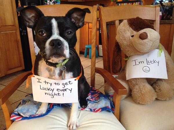 dog_shaming_10