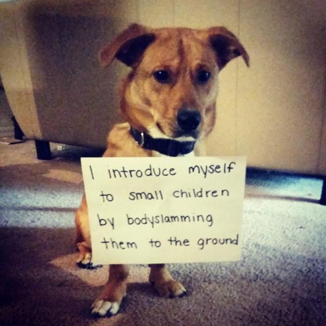 dog_shaming_14