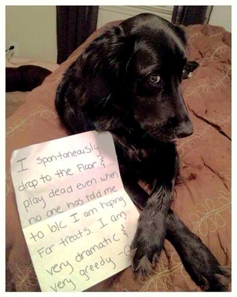 dog_shaming_2