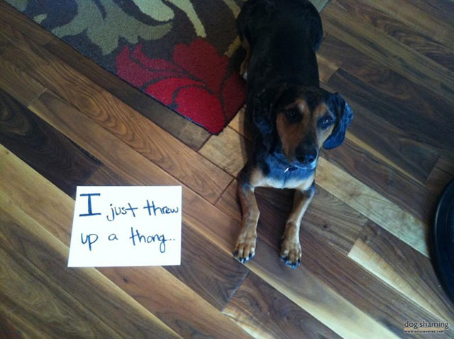 dog_shaming_28