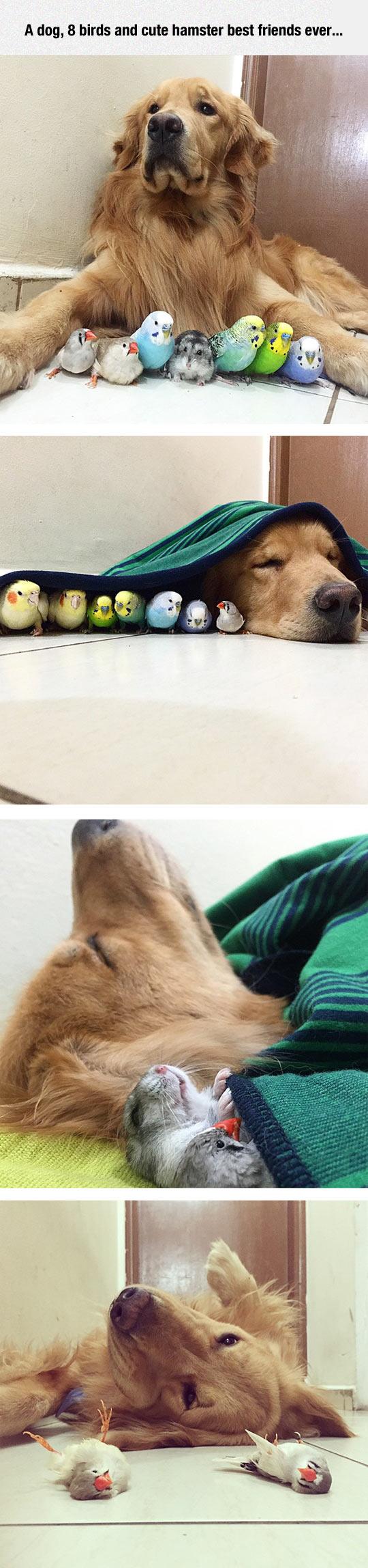 funny-Bob-dog-bird-friends-all
