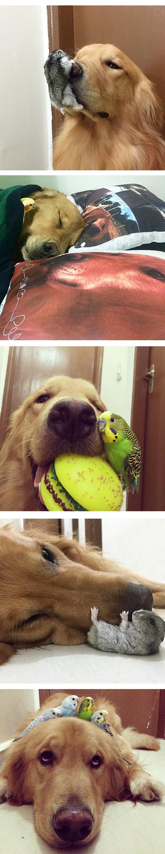 funny-Bob-dog-bird-friends